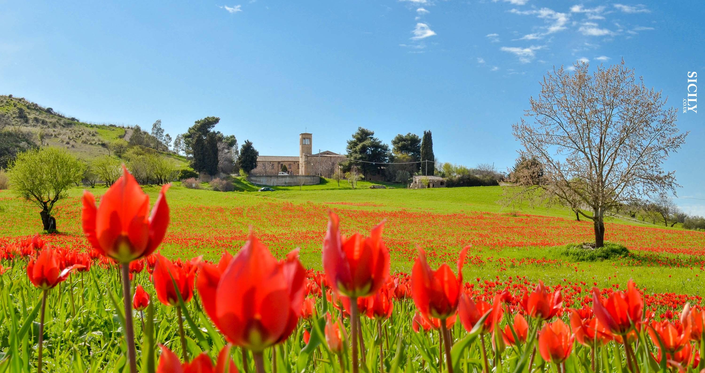 Blufi - Sicily