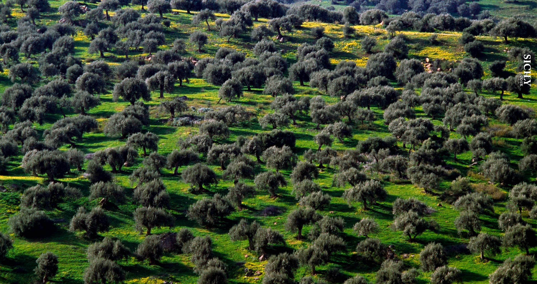 Bosco della Favara Nature Reserve - Sicily