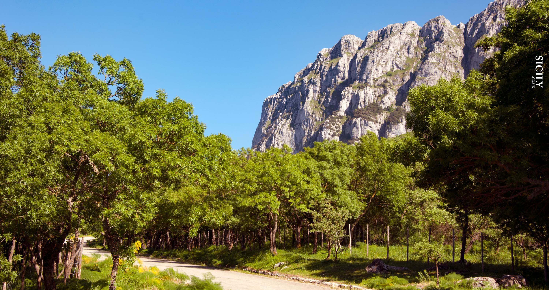 Bosco della Ficuzza Nature Reserve - Sicily