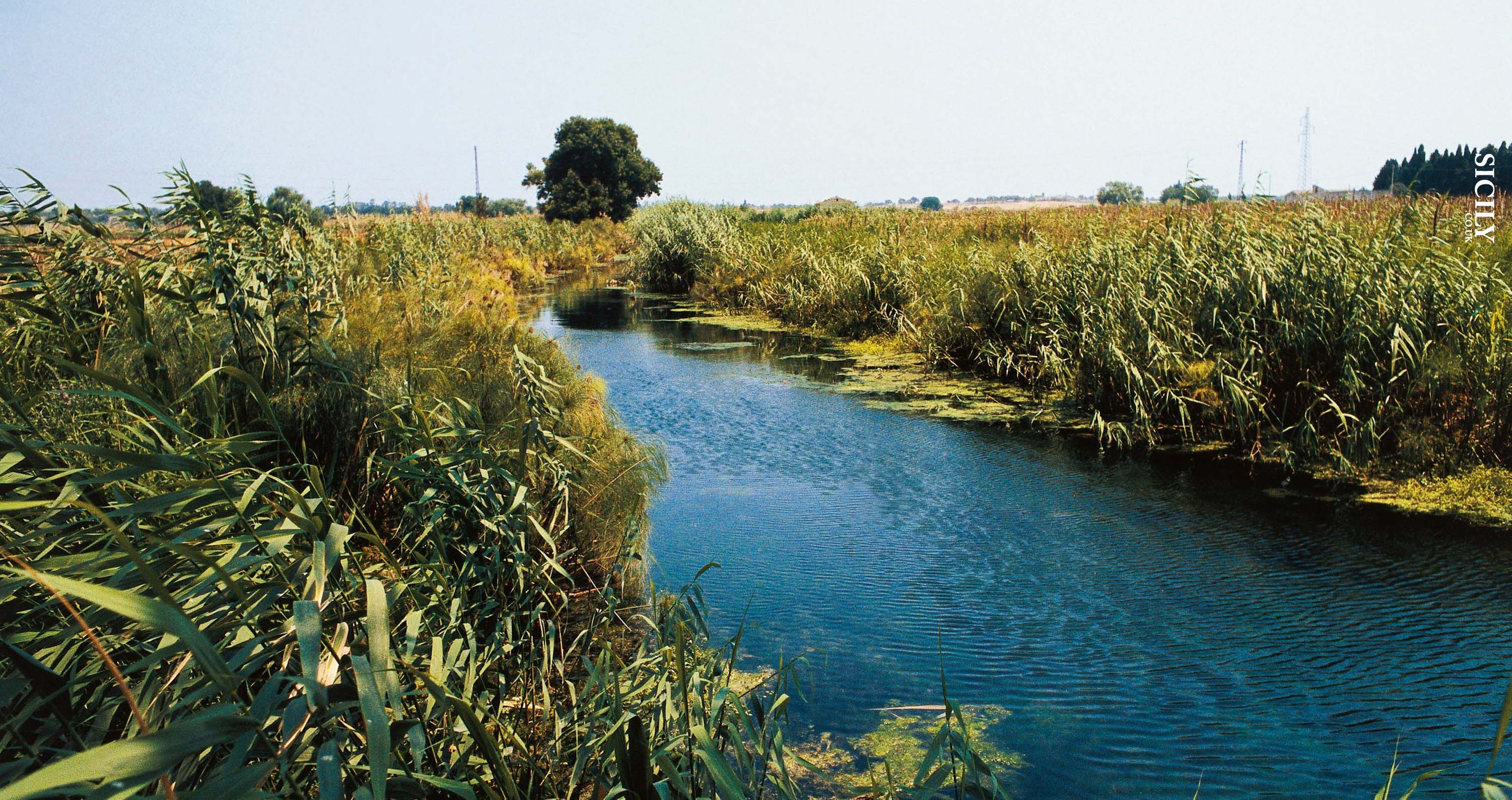 Nature Reserve of Ciane and Saline - Sicily