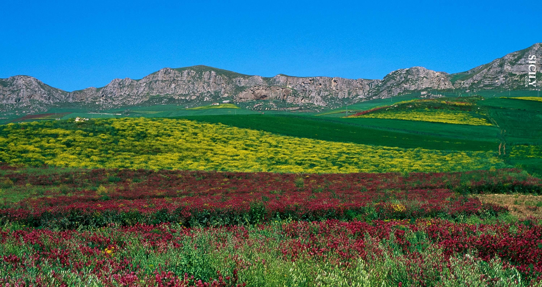 Serre Ciminna Nature Reserve - Sicily